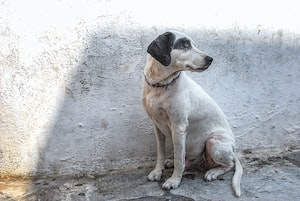 Canine Parvovirus enters Bengal: What you need to know