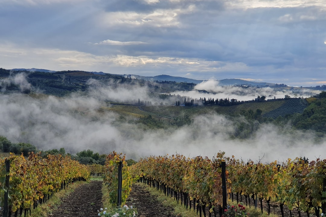 Morning mist over vineyards in Tuscany, Italy.
