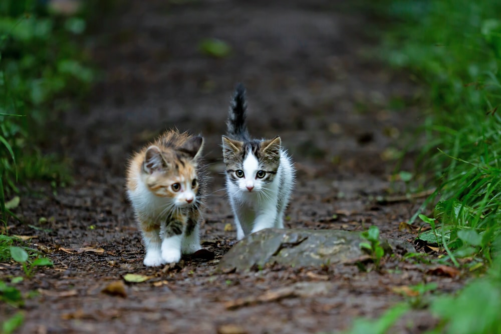 white brown and black cat on brown dried leaves