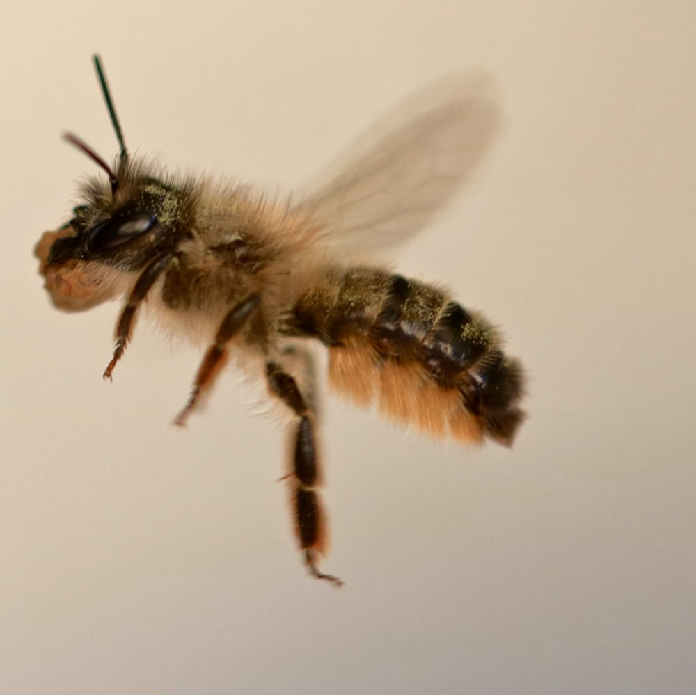 black and brown bee on white surface