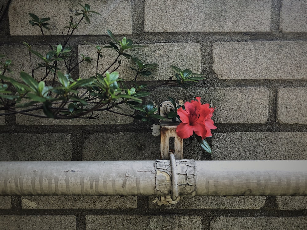 red flower on brown wooden stick