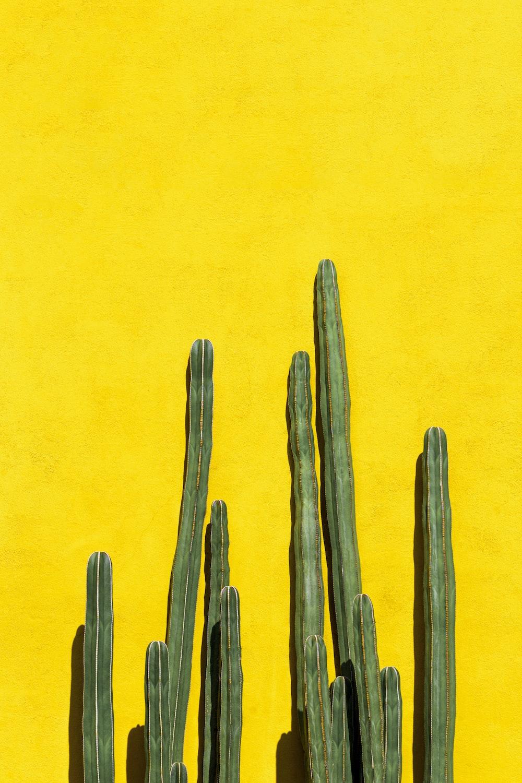 brown cactus plant on orange background