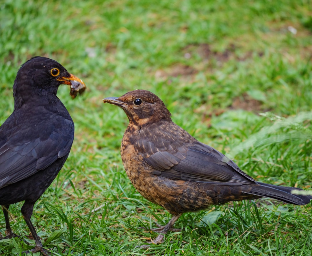 Supper on the lawn...