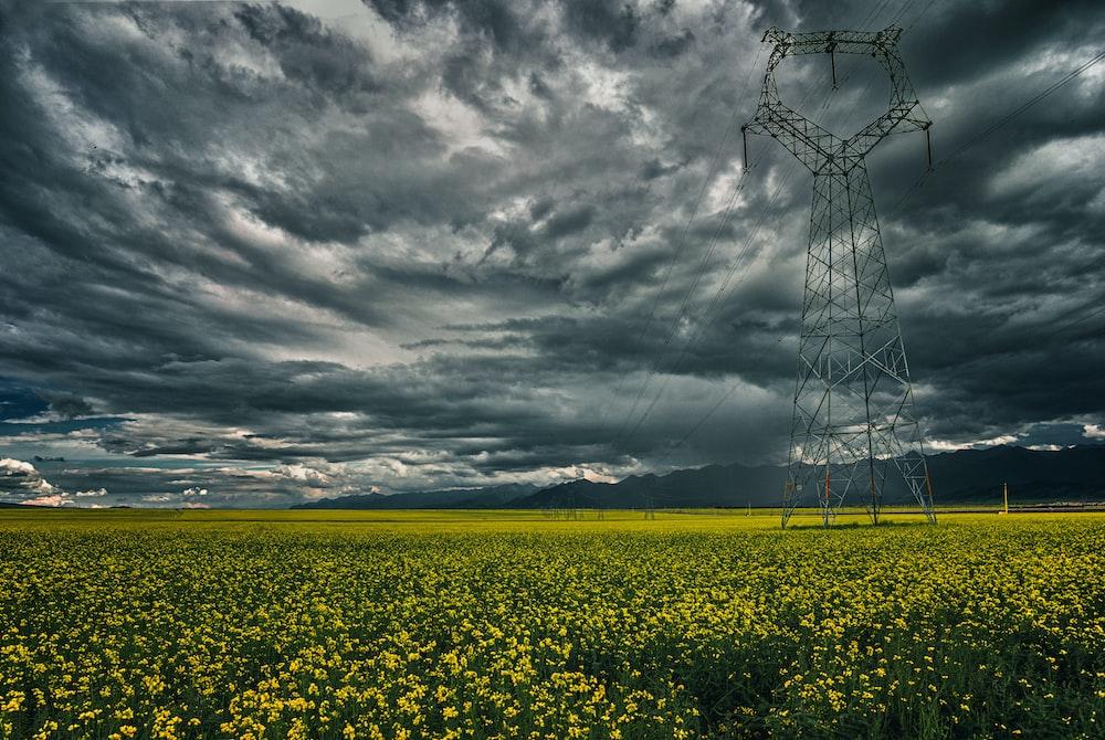 yellow flower field under gray clouds