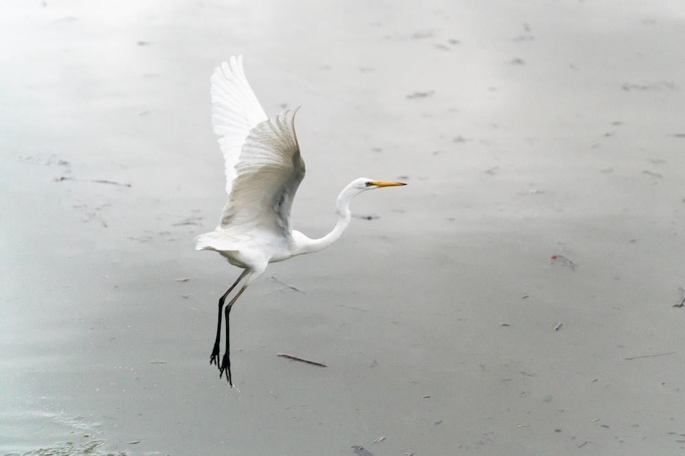 white bird on water during daytime