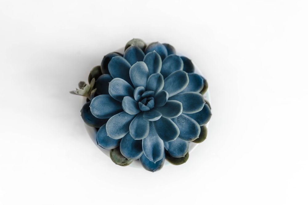 blue flower on white surface