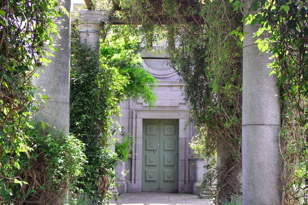 white wooden door near green plants
