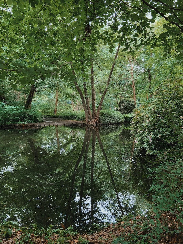 Tiergarten view in summer