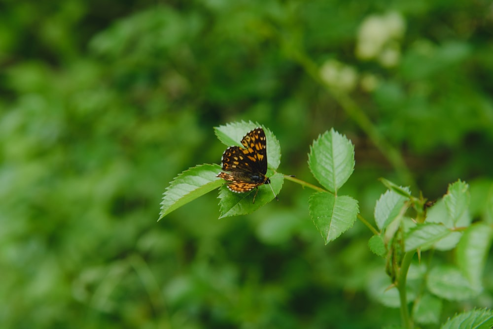 black and brown butterfly on green leaf during daytime
