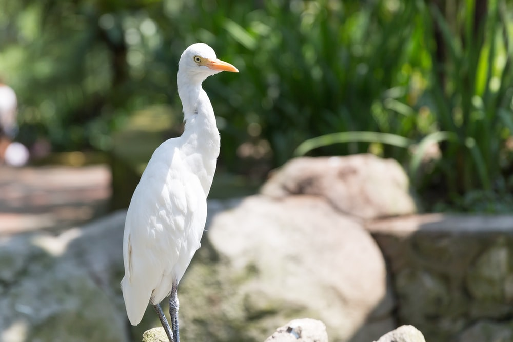 white bird on gray rock during daytime