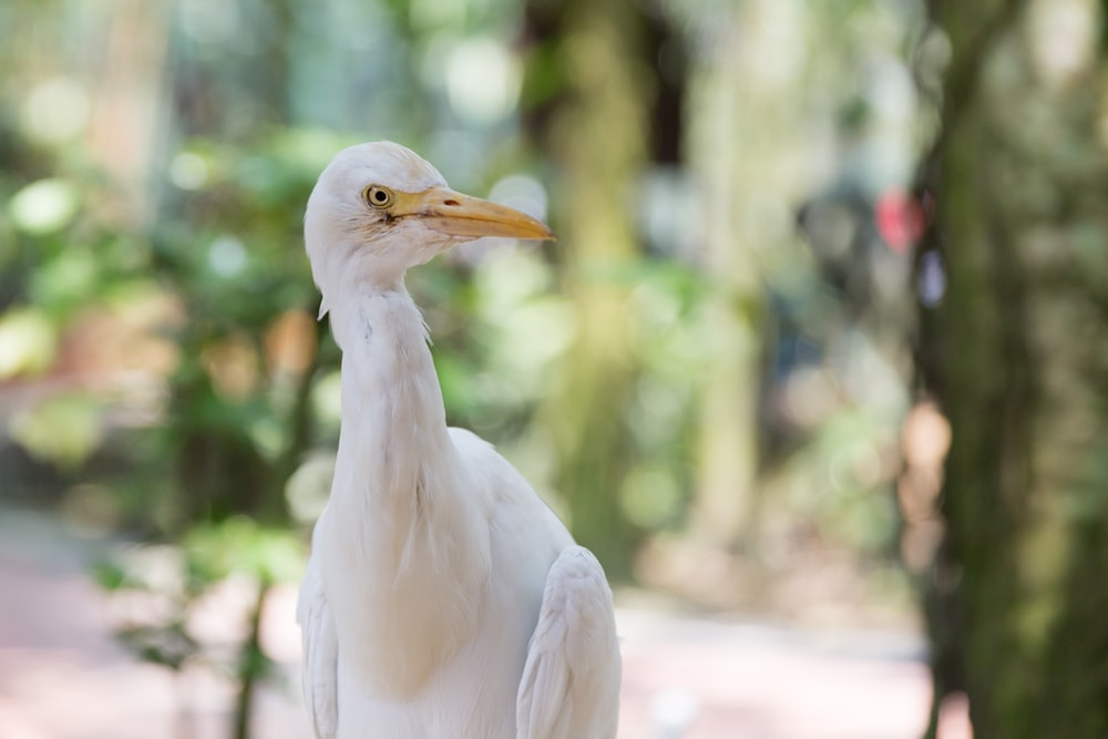 white bird on brown wooden table during daytime