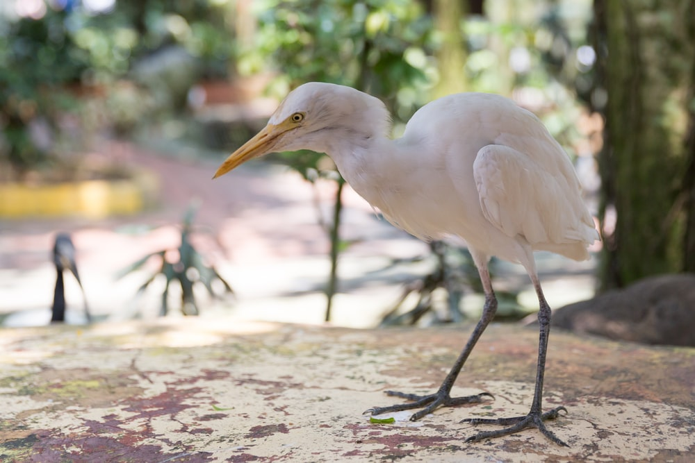 white bird on brown wooden stick during daytime