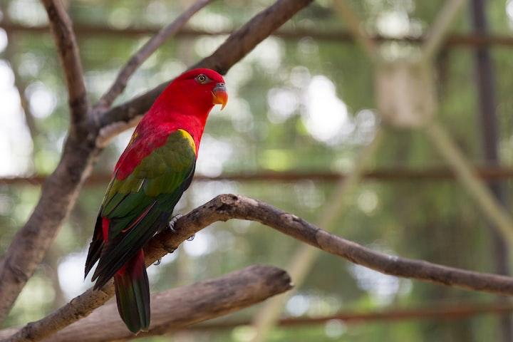 List of Rarest Birds in the World