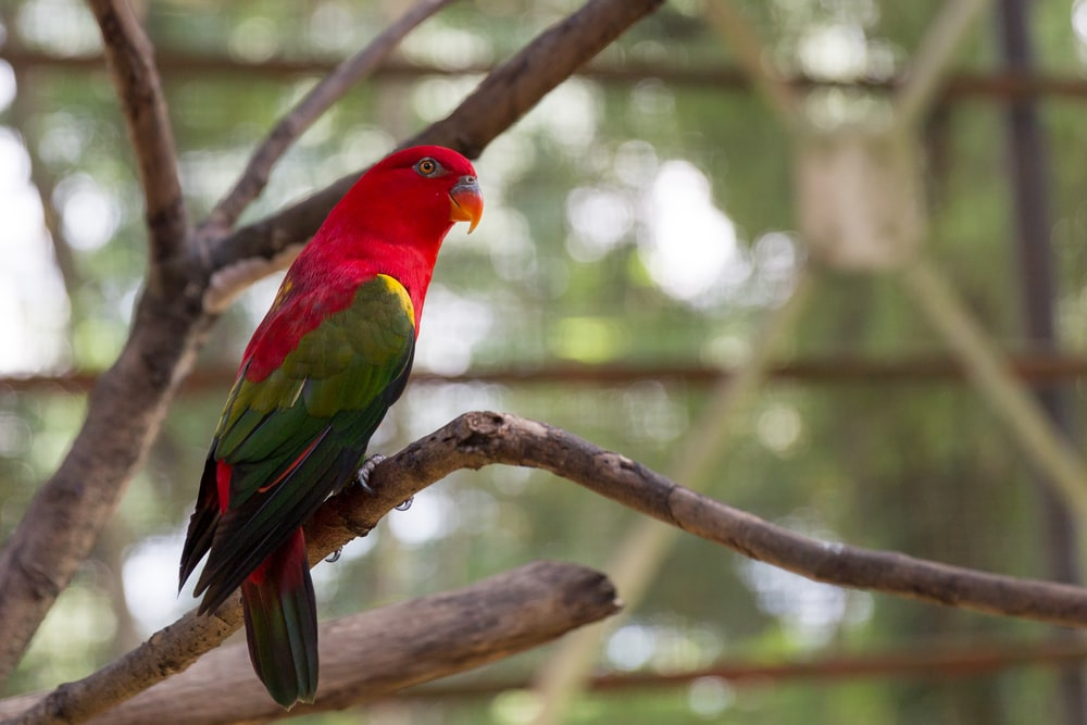 red green and yellow bird on brown tree branch during daytime