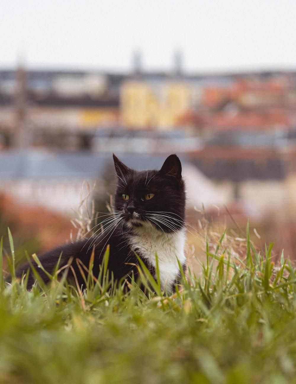 tuxedo cat on green grass during daytime