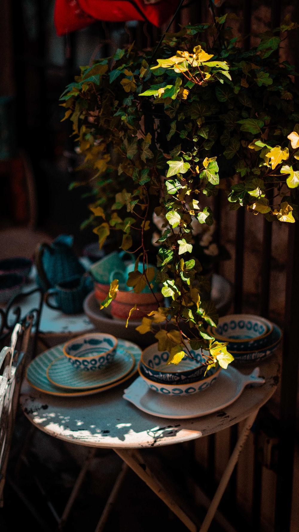 green plant on blue ceramic saucer