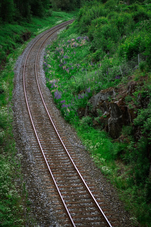 green plants on brown train rail