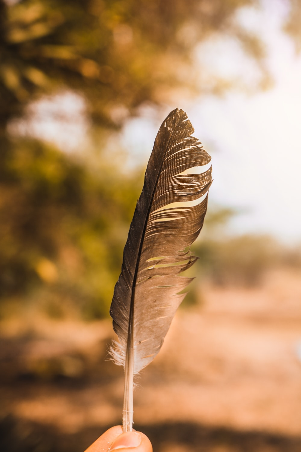 white and black feather in close up photography