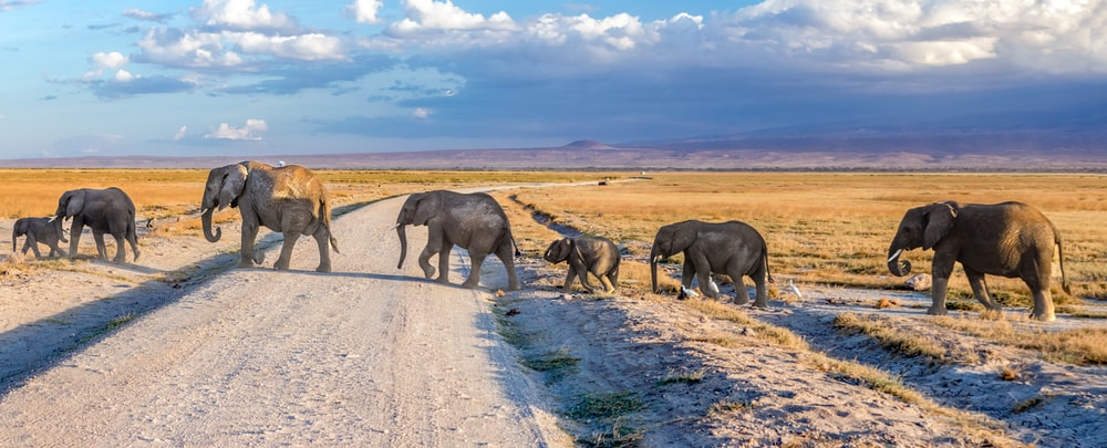 4 elephants walking on gray dirt road during daytime