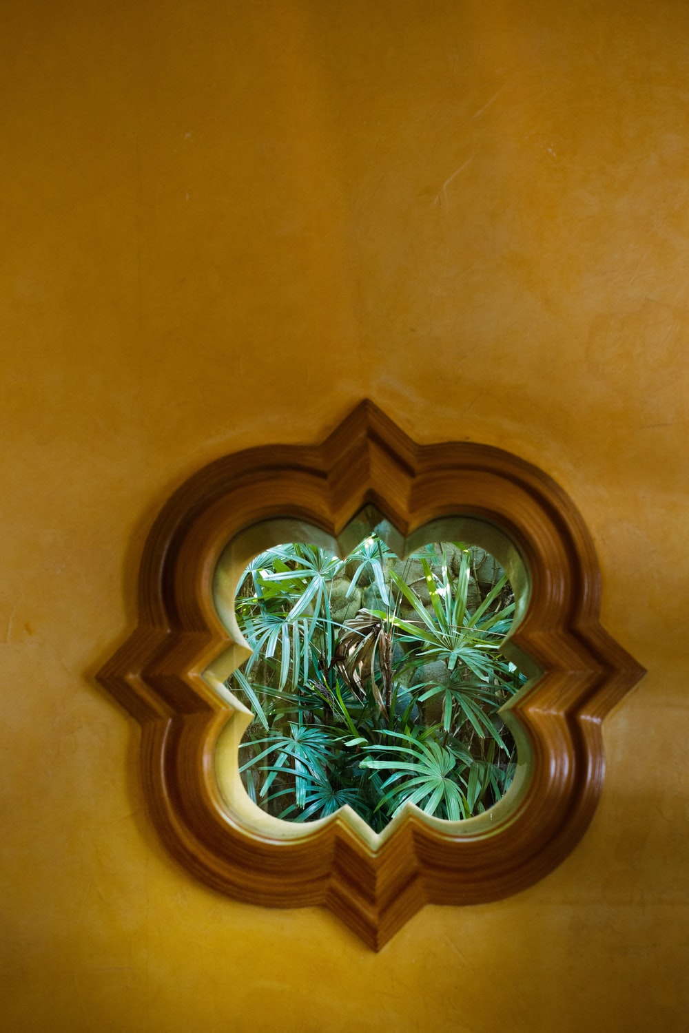 green plant on brown wooden window