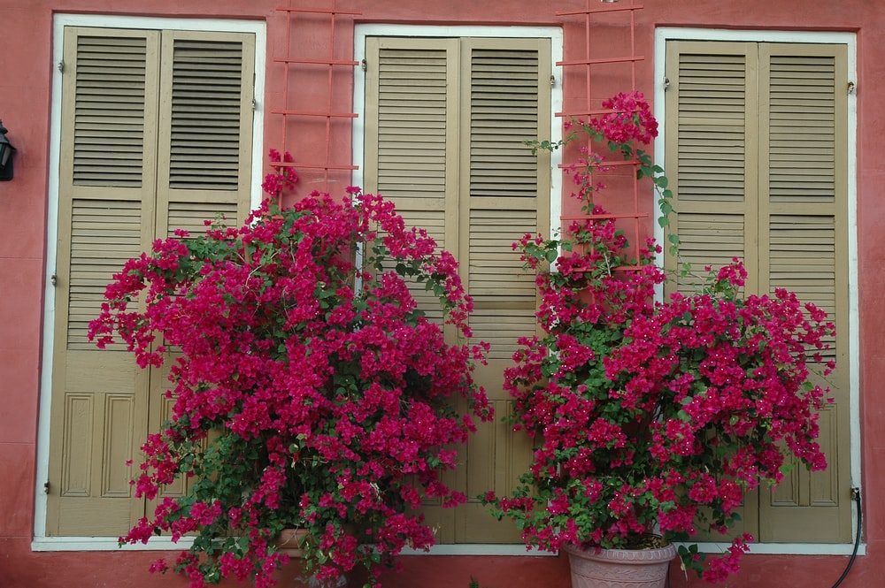 pink flowers in front of red brick building