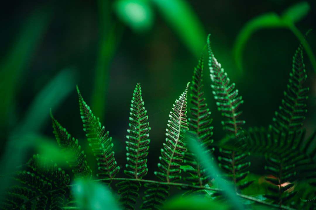 Underside of a fern growing near a stream. The growths on the underside are the spores of the fern.