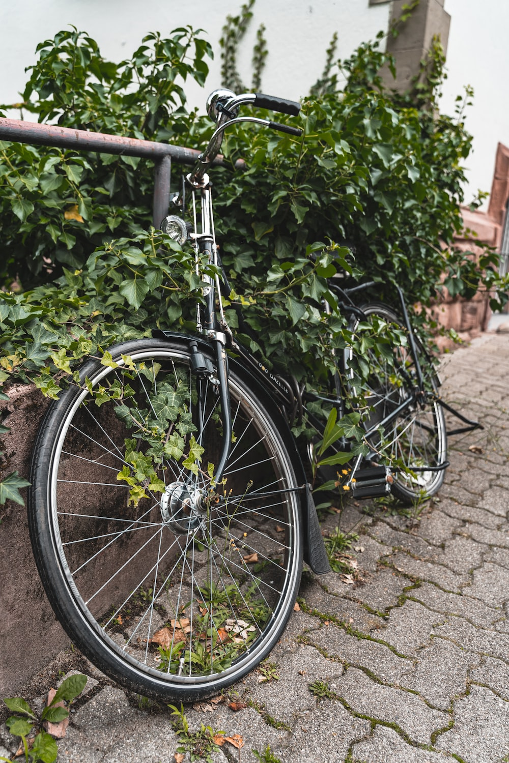 black bicycle parked beside green plants