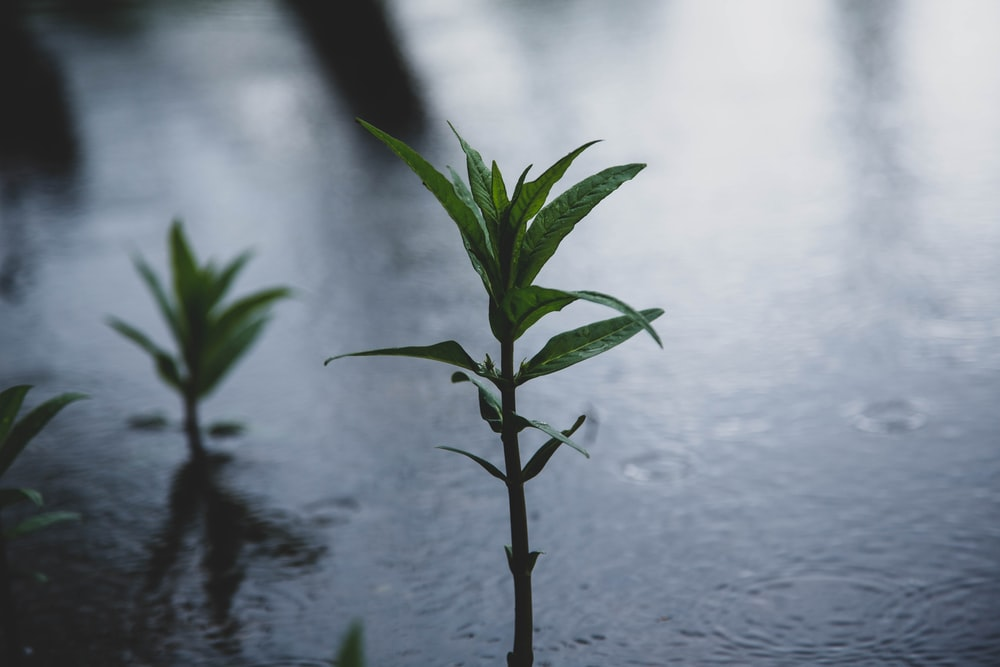 green plant on water during daytime