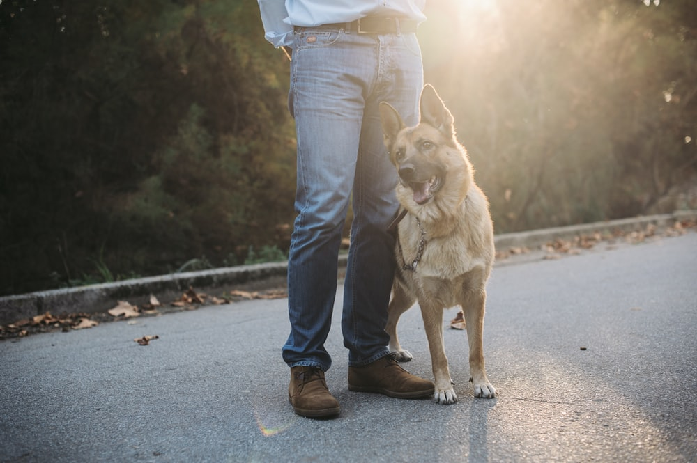 woman in blue denim jeans and white shirt with brown short coated dog on road during