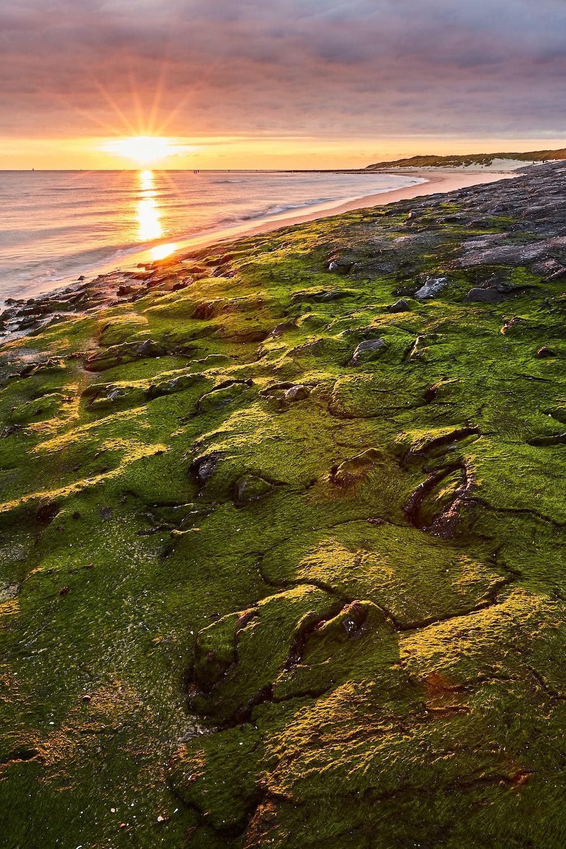 green moss on seashore during daytime