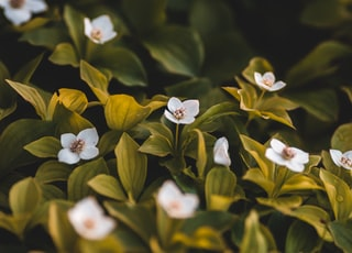 white and yellow flowers with green leaves
