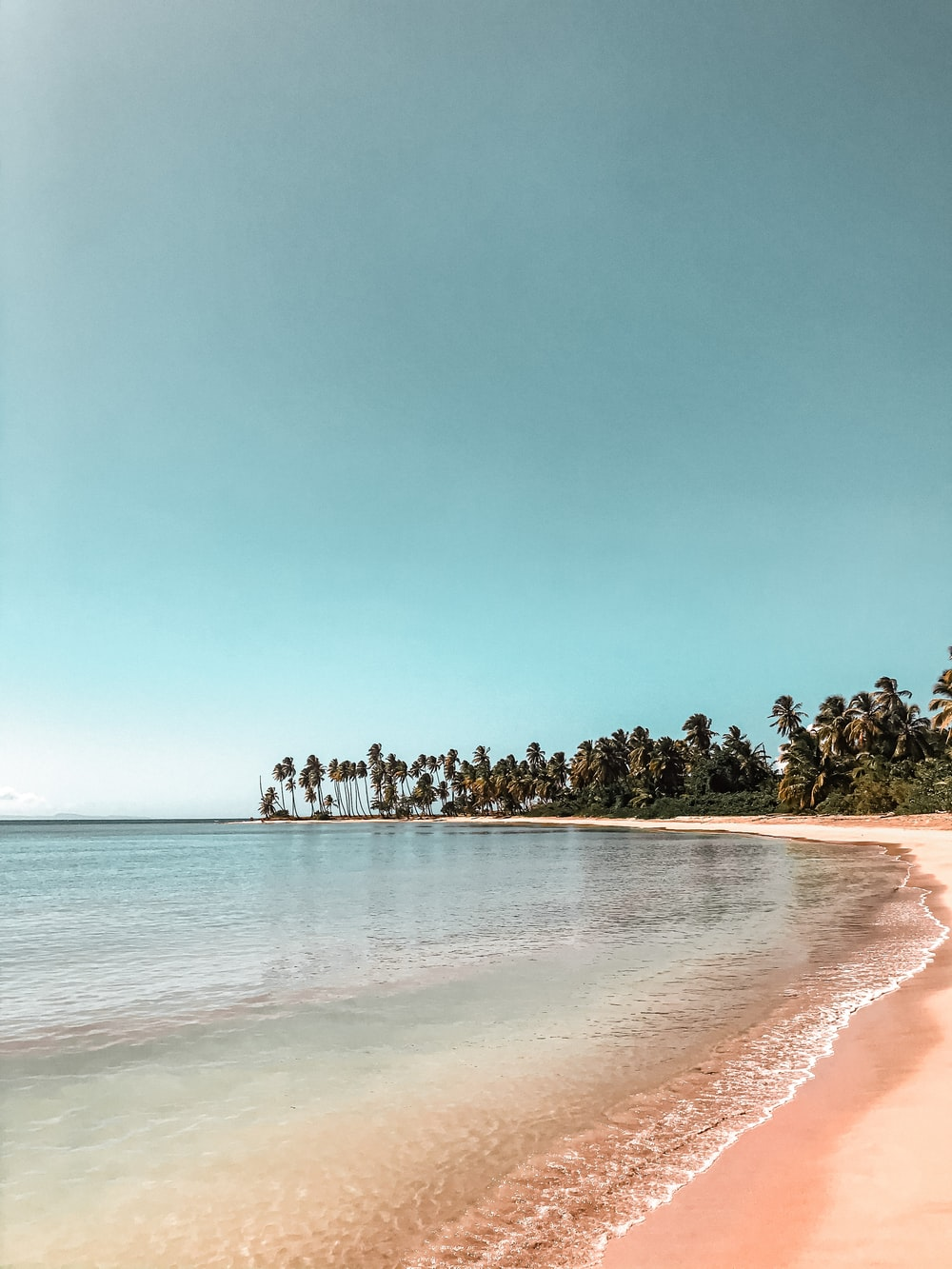 green trees on brown sand beach during daytime