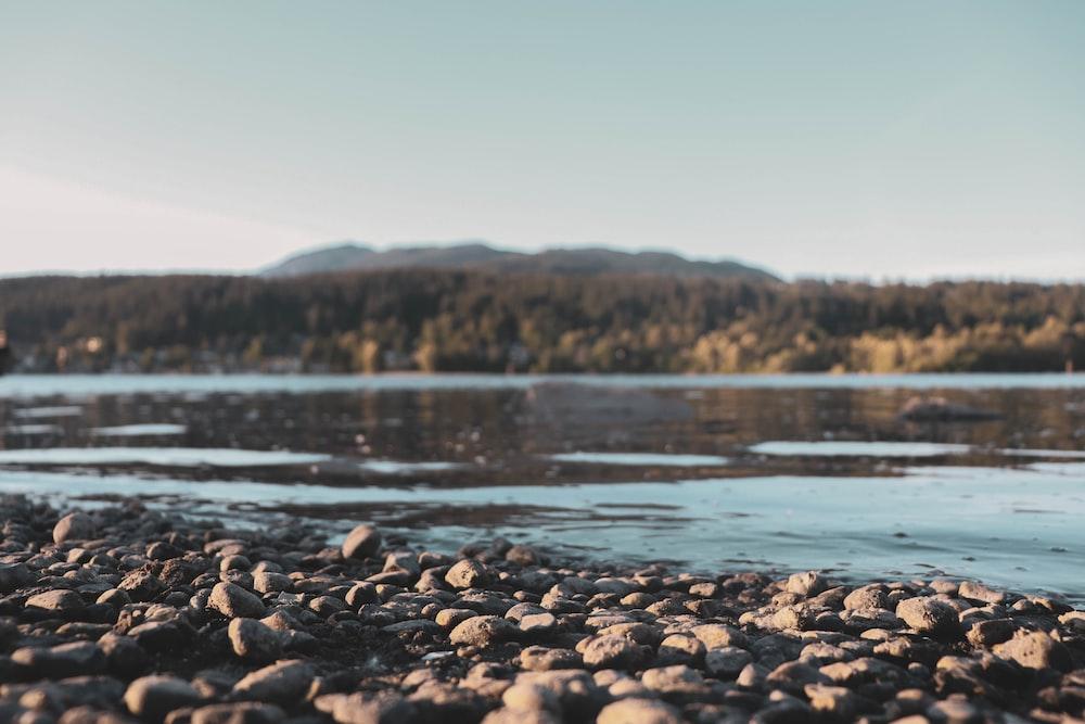 brown rocks on water during daytime