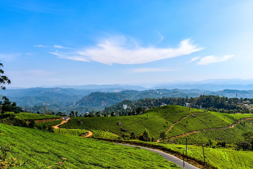 the tea gardens of munnar