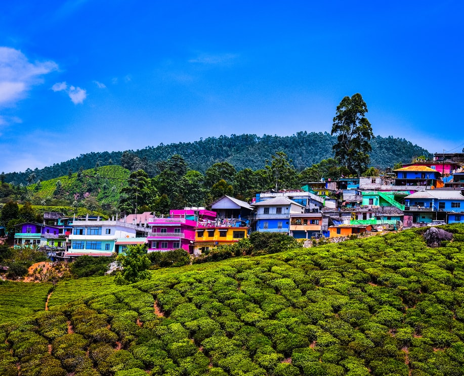 The Vibrant houses of munnar: Resorts in Munnar with Swimming Pool