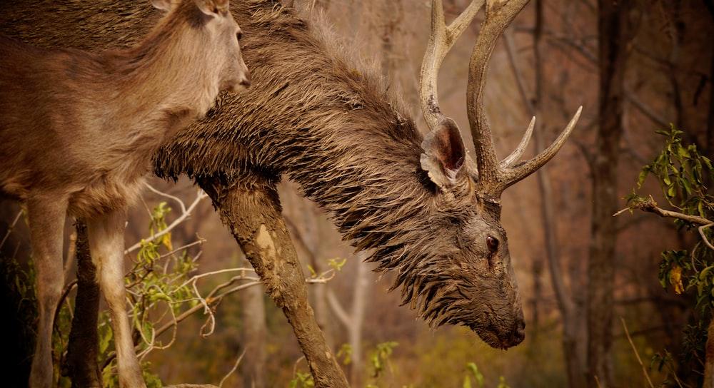 brown horse eating brown tree branch during daytime