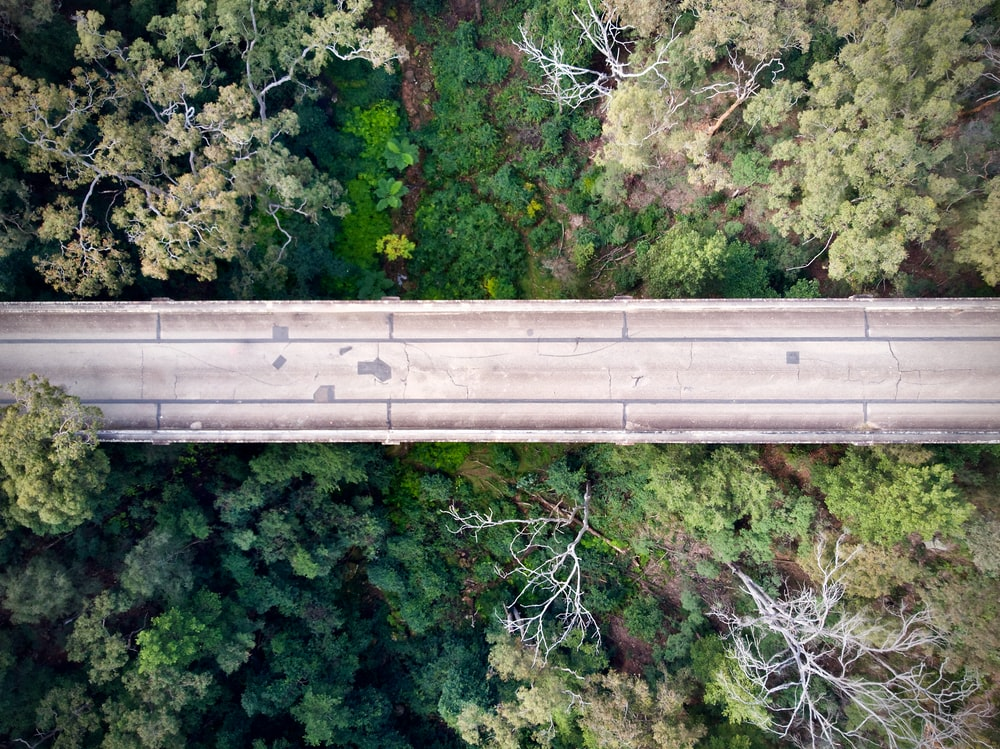 gray concrete bridge in the middle of green trees
