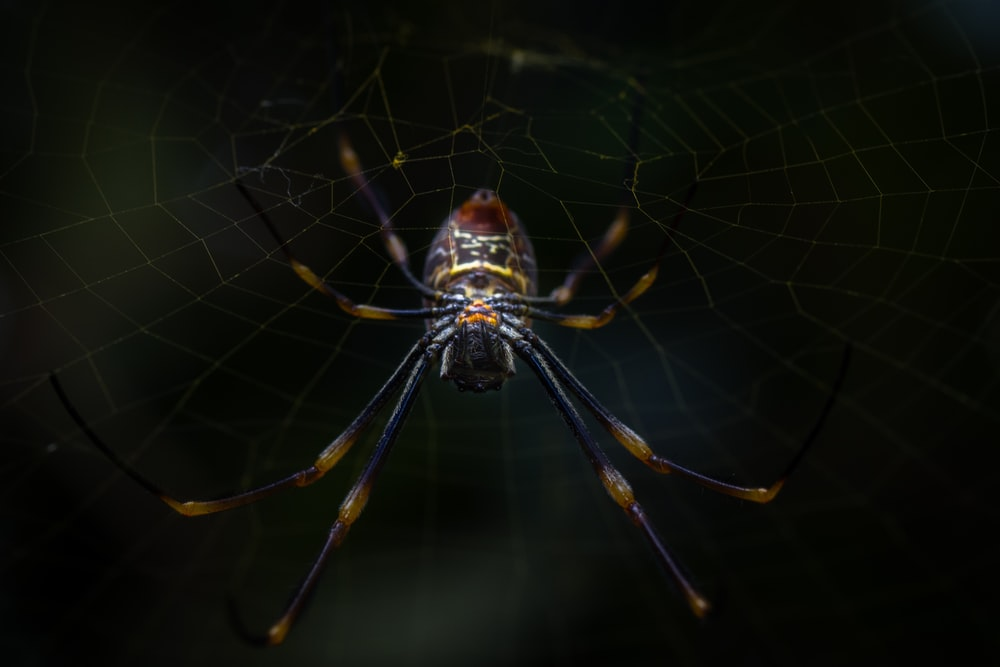 brown spider on spider web in close up photography during daytime