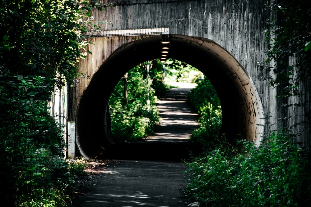 brown wooden tunnel with green plants