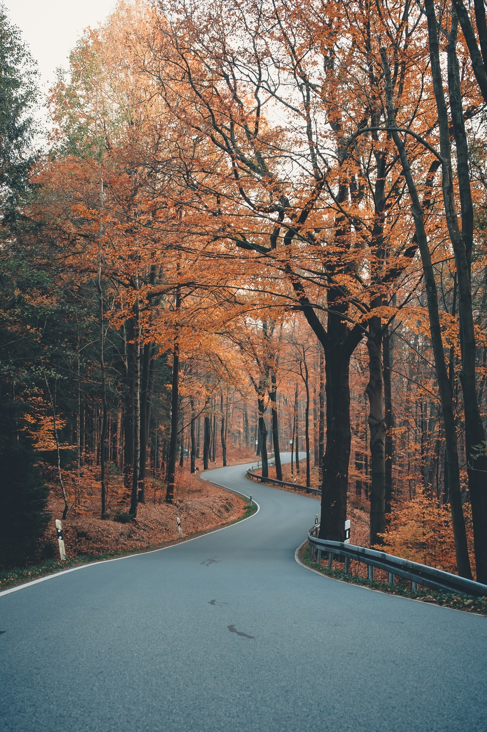 brown trees on gray concrete road during daytime
