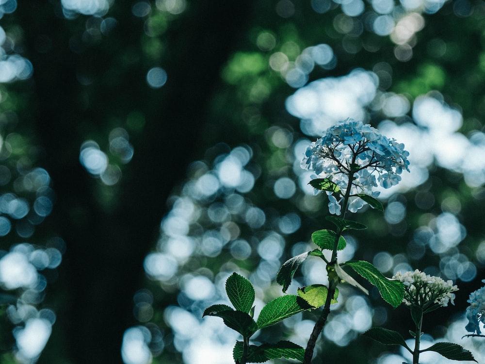 チルトシフトレンズの青い花