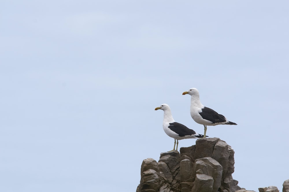 white and black bird on brown rock during daytime