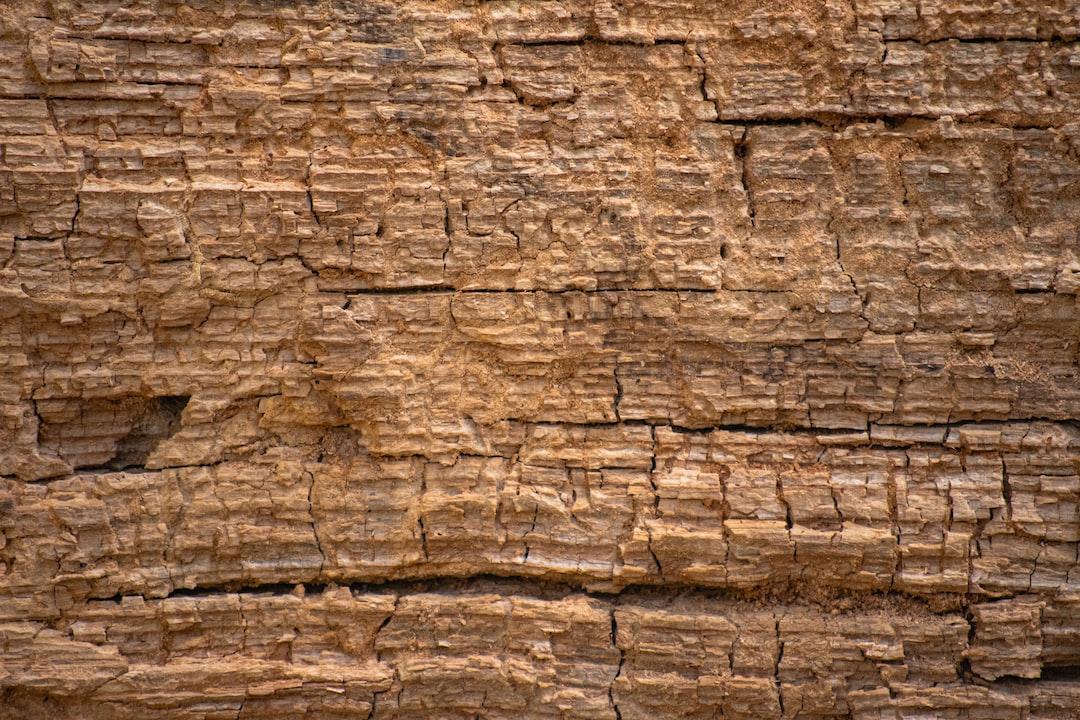 Texture decaying wood closeup