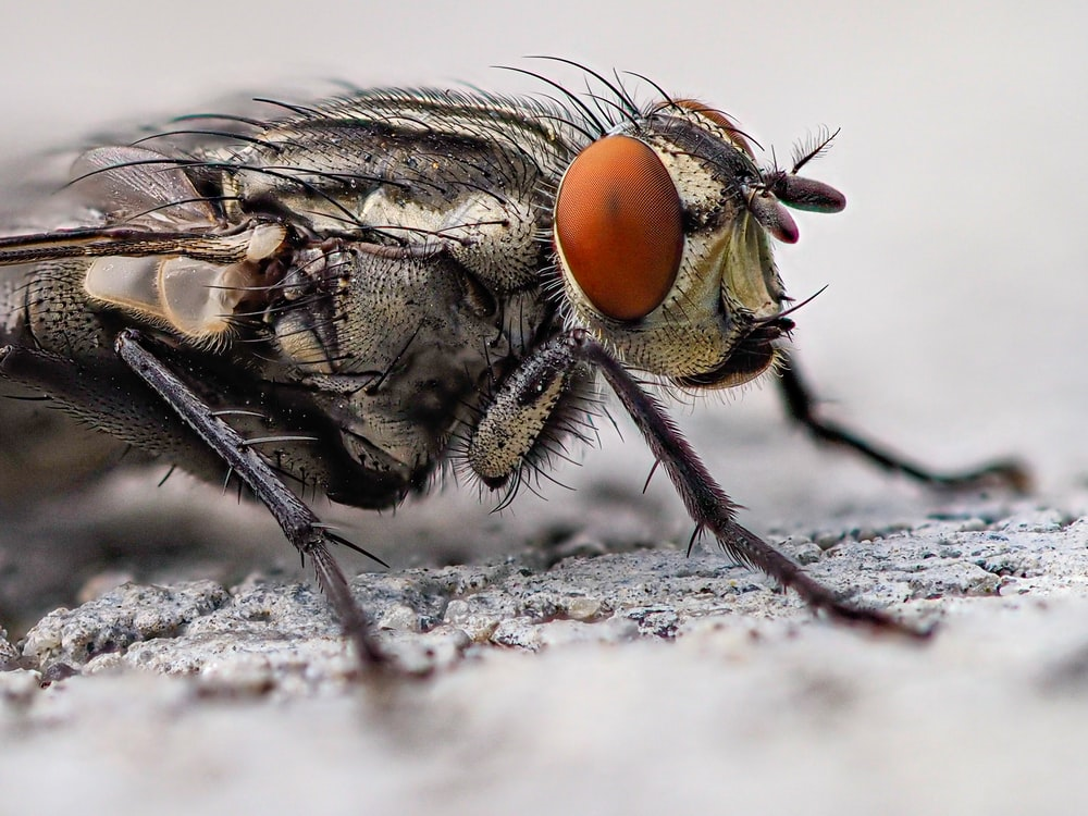 black and brown fly on white textile