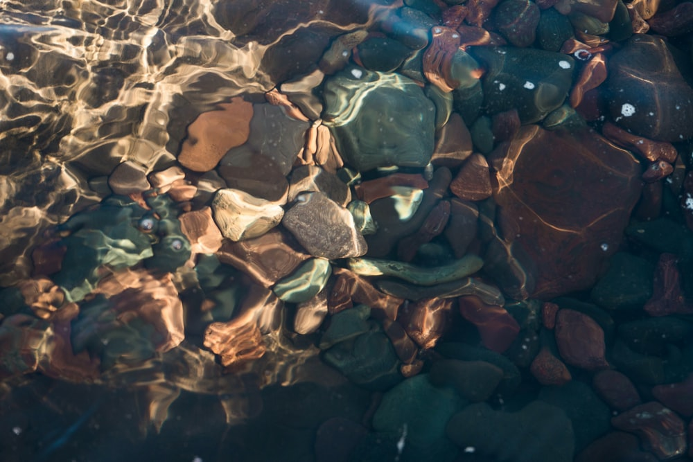 brown and gray stone on water