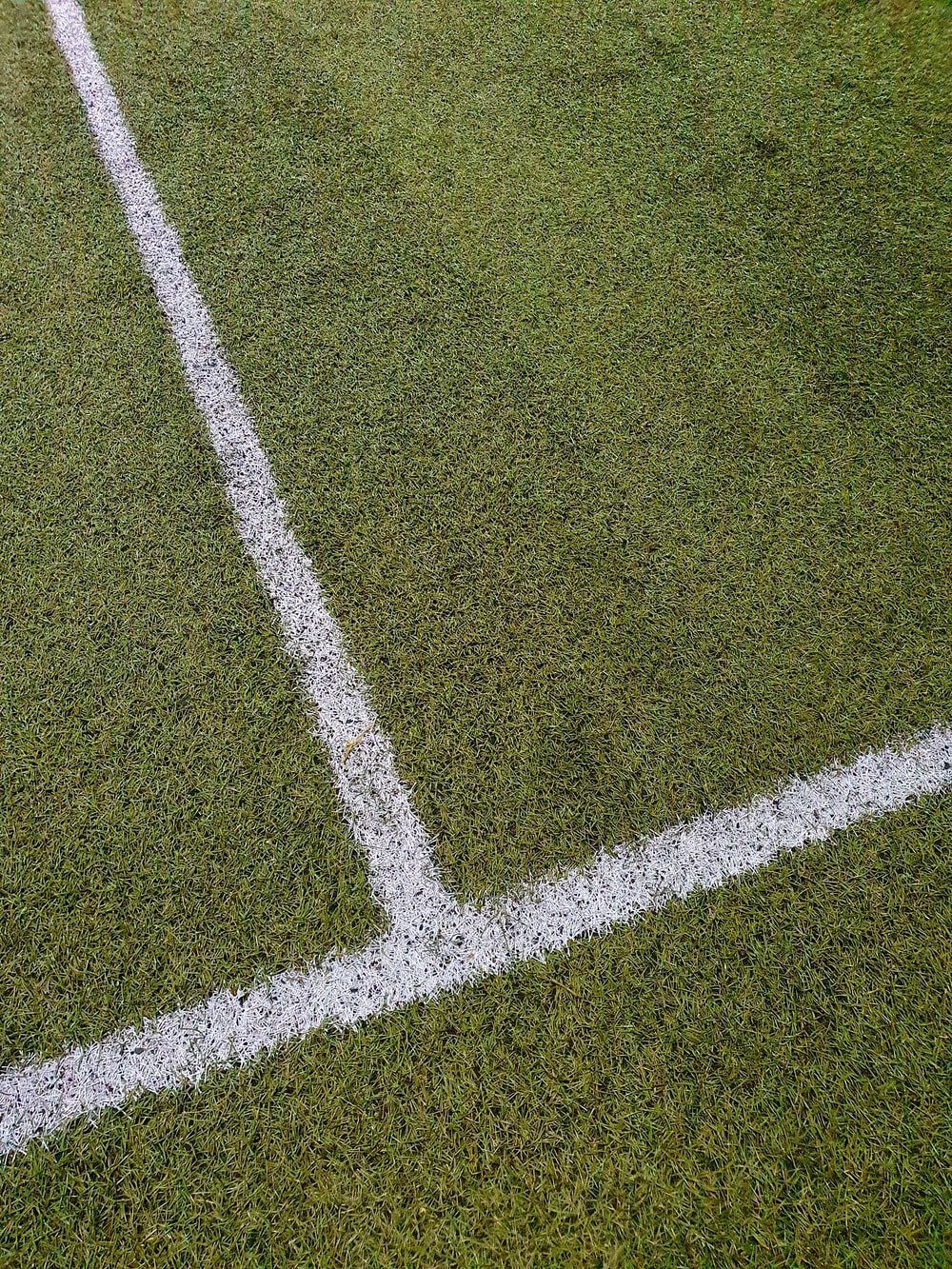 green and white grass field