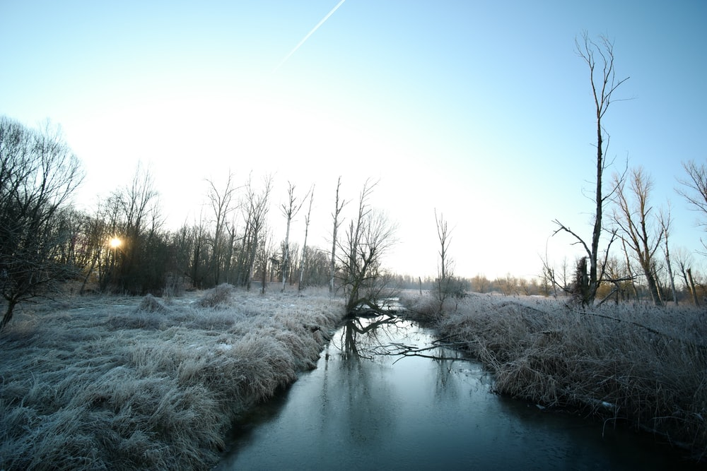 snow covered trees beside river under blue sky during daytime