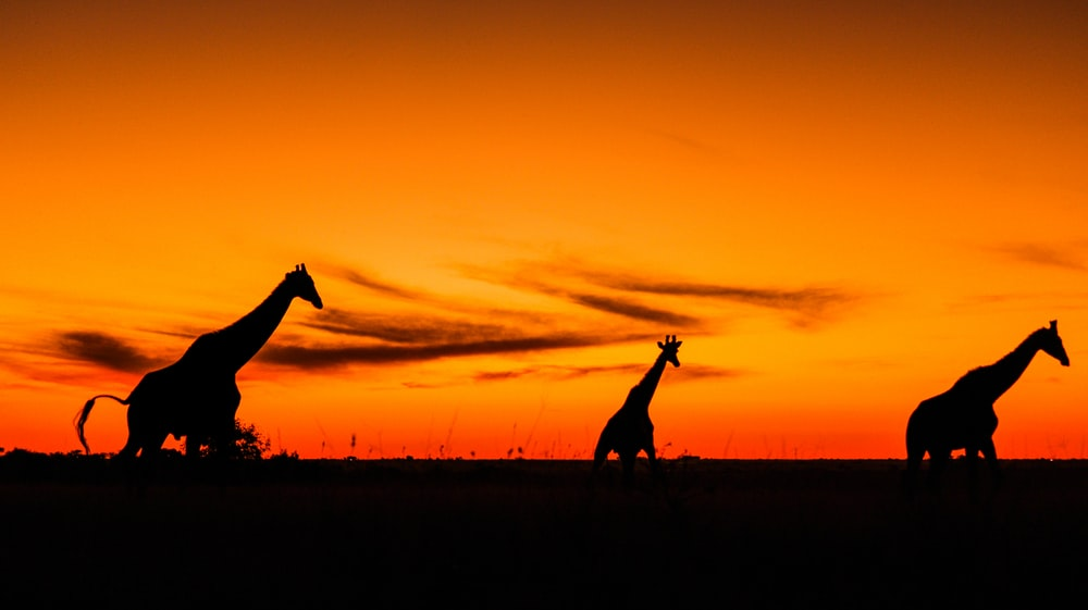 silhouette of 2 people standing on grass field during sunset