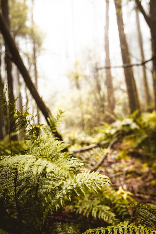 green fern plant in tilt shift lens