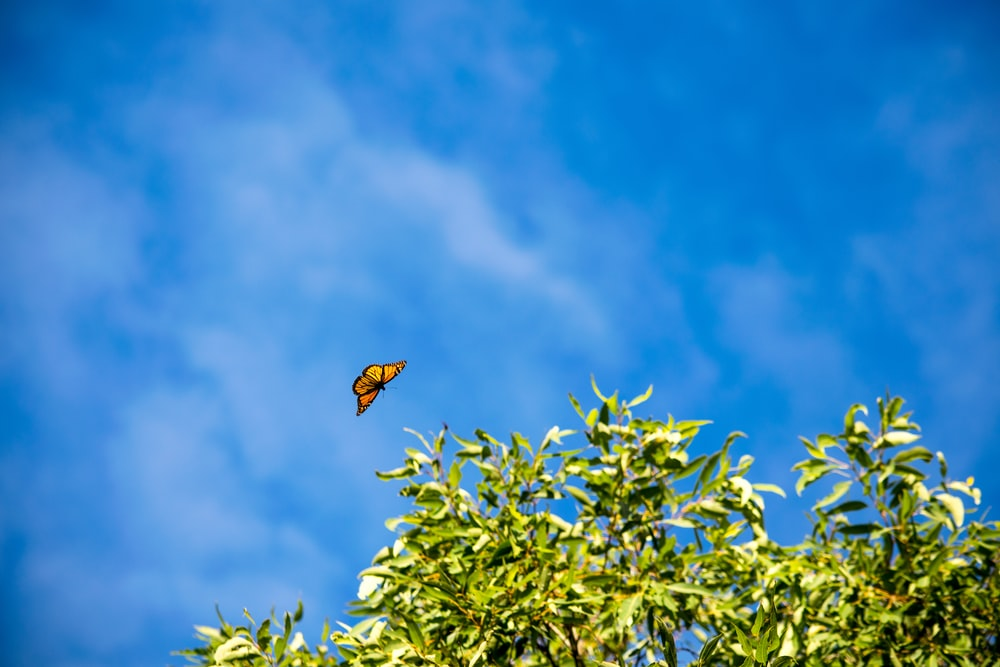brown and black bird flying over green leaves during daytime
